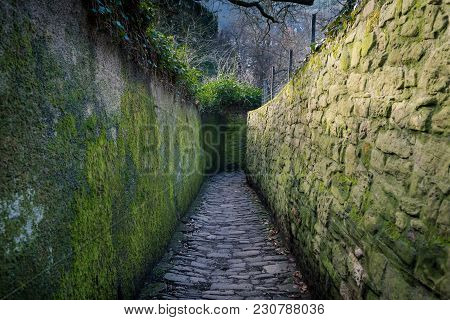 Unusual Stone Road In The Park. Colorful Passage In Recreation Area. Green Corridor With Plants And