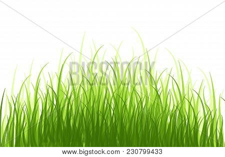 Early Spring Green Grass Horizontal  Grass Row, Grass Bushes, Grass Inscription. Grass Texture Desig
