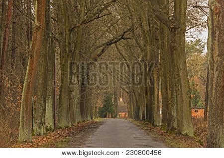 A Narrow, Rural Asphalt Road. On Both Sides, Tall, Deciduous Trees Grow. It Is Early Spring, There A