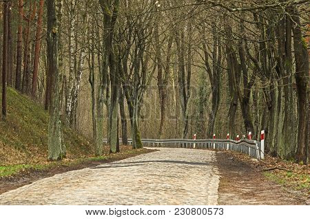 A Narrow, Rural Paved Road. On Both Sides, Tall, Deciduous Trees Grow. It Is Early Spring, There Are