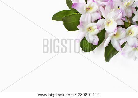 Styled Stock Photo. Feminine Desktop Scene. Dendrobium Orchid Flowers On White Table Background. Emp