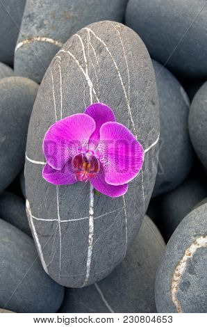 Pink orchid and one striped stone