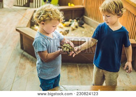 Toddlers Boy And Girl Caresses And Playing With Turtle In The Petting Zoo. Concept Of Sustainability