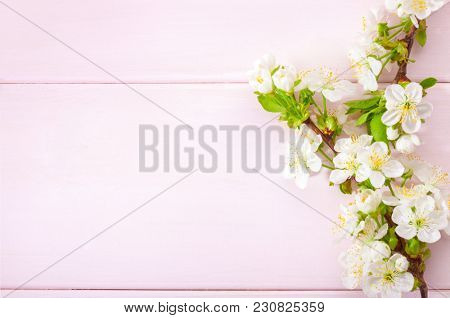 Light pink wooden background with flowering cherry branches.
