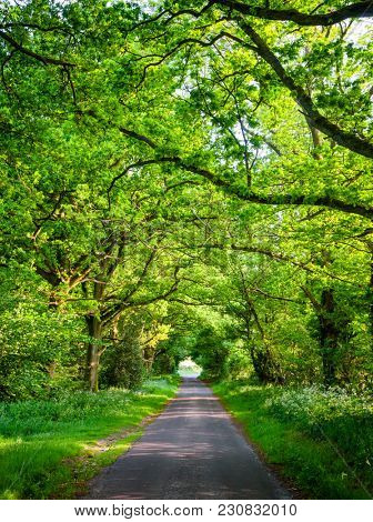 Scenic oak tree tunnel road in Southern England