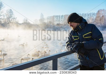 Man at winter nonfreezing lake with white whooping swans. The place of wintering of swans, Altay, Siberia, Russia.
