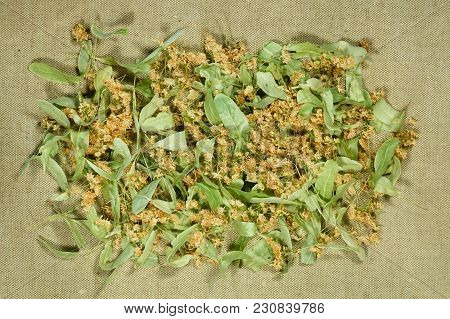 Linden. Dry Herbs For Use In Alternative Medicine, Phytotherapy, Spa, Herbal Cosmetics. Preparing In