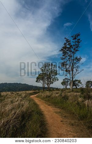 Landscape Of  Meadow With Tree , Khao Yai National Park  Thailand