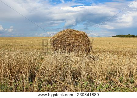 The Sheaf Of Hay On The Field