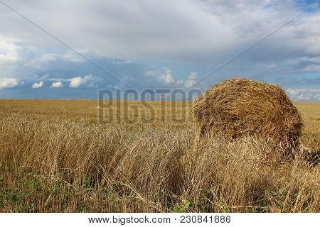 Sheaf Of Hay On A Wheat Field In Siberia