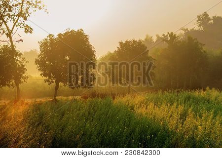 Sun Rises In The Background, Sunrays Falling Over A Green Agriculture Field. Rural Indian Scene. Nat