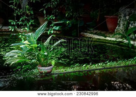 Concept Nature, Ecology. Shaded Decorative Pond With Potted And Water Plants. Light Illuminates Plan