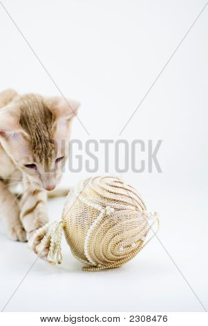 Cat Playing With  Christmass Ball