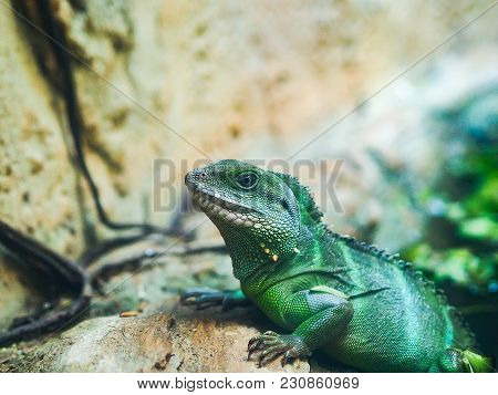 Close Up Head Of Lizard While Disguise It Self In Green Color.