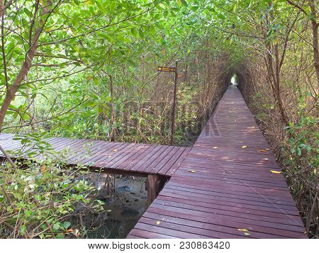 Boardwalk Underpass Of Trees To The Otherworldly Of Deep Forest, Focus On Boardwalk Junction.