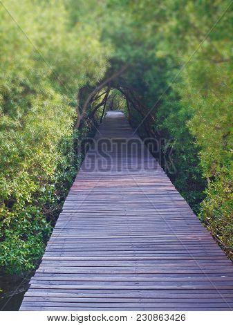 Boardwalk Underpass Of Trees To The Otherworldly Of Deep Forest, Blurred Trees Tunnel With Focus On