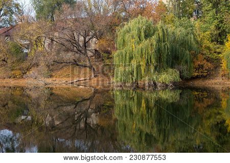 Beautiful Lake, Reflection Of Tree In A Lake. Picturesque Pond With Beautiful Green Nature, Trees An
