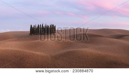 Panorama Of Cypress Grove At The Field. Tuscany, Italy, Europe.