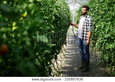 Spaying Vegetables With Water Or Plant Protection Products Such As Pesticides Against Diseases And P