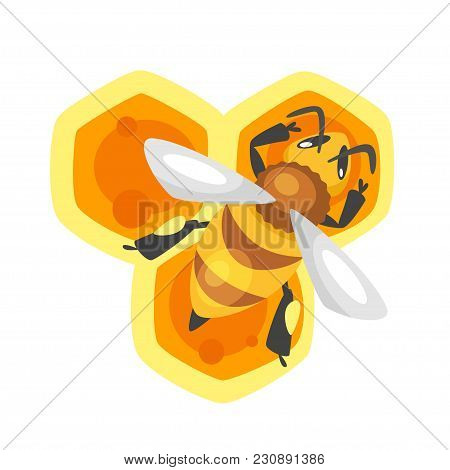 Vector Cartoon Style Illustration Of A Bee Sitting On The Honeycomb. Isolated On White Background.