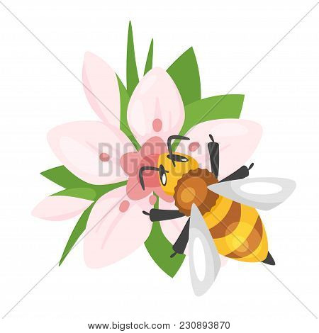 Vector Cartoon Style Illustration Of A Bee Sitting On The Blooming Pink Flower. Isolated On White Ba