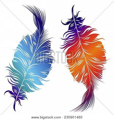 Decorative Feathers .vector Design Of Decorative Feathers