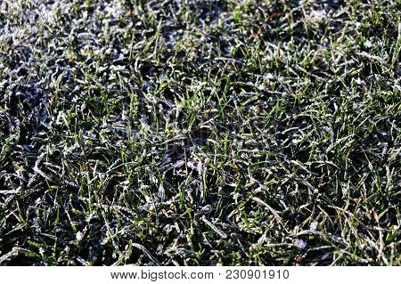 A Detail On Grass Covered With Hoarfrost In The Morning Time
