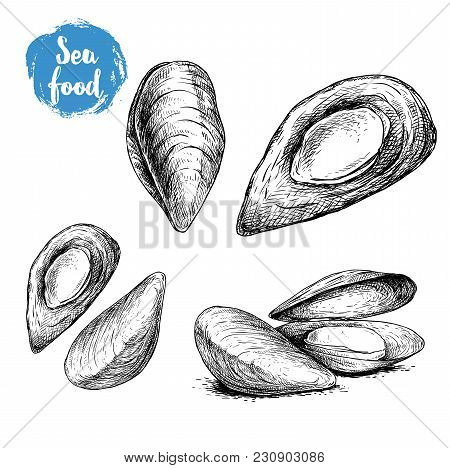 Hand Drawn Sketch Style Mussels Set. Closed And Opened. Fresh And Cooked. Sea Food Vector Illustrati