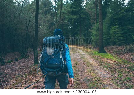 Male Hiker With Backpack On Path In Pine Forest. Rear View.