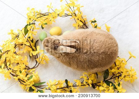 Tan And Rufus Easter Bunny Rabbit With Yellow Spring Forsythia Flowers On White Textured Floor, Flat