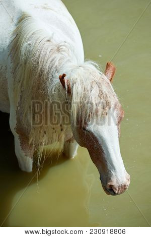 Horses On The Pond. The Horse Is One Of Two Extant Subspecies Of Equus Ferus. It Is  Ungulate Mammal