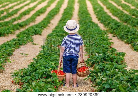 Happy Adorable Little Kid Boy Picking And Eating Strawberries On Organic Berry Bio Farm In Summer, O