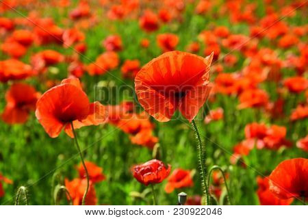 Remembrance Day, Anzac Day, Serenity. Remebrance Day, Memorial Day, Narcotics