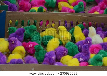 The Colorful Chickens In Wooden Basket Which Sold At One Of Animal Market In Yogyakarta, Indonesia.