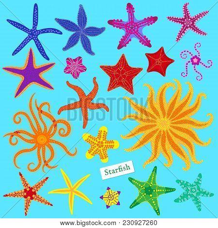 Sea Stars Set. Multicolored Starfish. Starfishes Underwater Invertebrate Animal. Vector Illustration