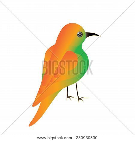 Hummingbirds Meropidae Colibri Bright Yellow Plumage Isolated On A White Background Art Creative Mod