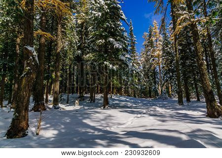Beautiful View Of Winter Forest Near Lower Multinskoe Lake,mountain Altai Republic, Siberia , Russia