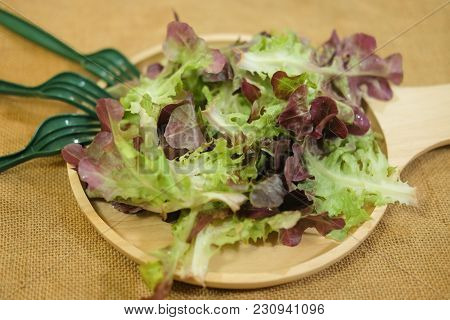 Vegetables For Salad Of Red Oak And Green Oak On The Wooden Plate