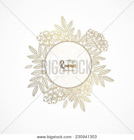 Gold Vintage Illustration With Rowan. Engraved Style. Healthy Food Design Template With Berries. Gol