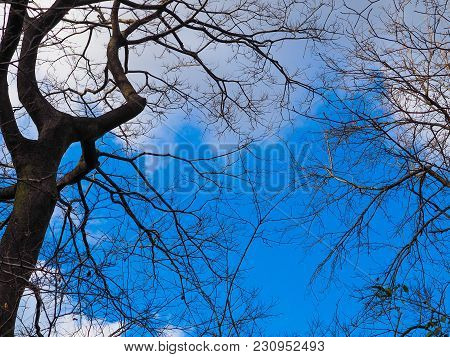 Blue Sky And Clouds Above Silhouetted Branches. Bare Tree Branches Are Silhouetted In The Forest Aga