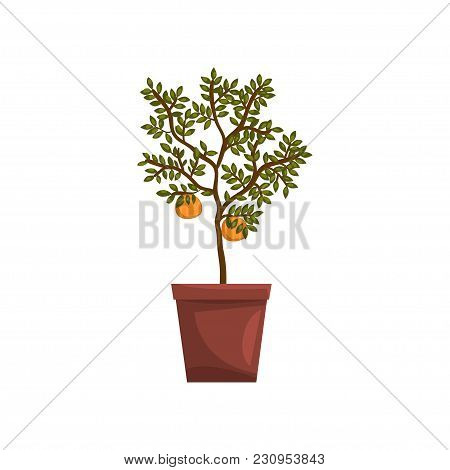 Kumquat Indoor House Plant In Brown Pot, Element For Decoration Home Interior Vector Illustration Is
