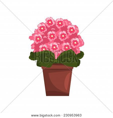 Flowering Pink Violet Indoor House Plant In Brown Pot, Element For Decoration Home Interior Vector I