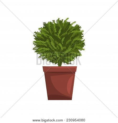 Green Indoor House Plant In Brown Pot, Element For Decoration Home Interior Vector Illustration Isol
