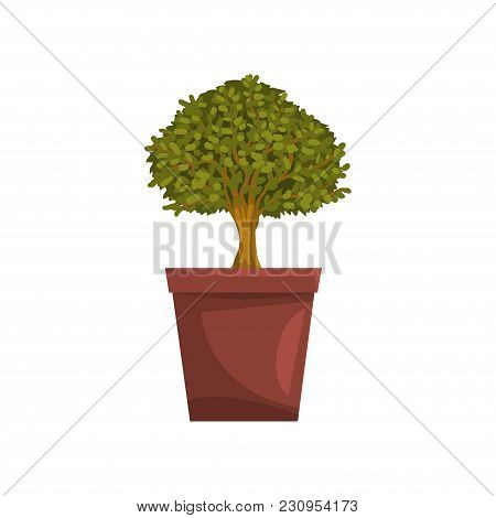 Portulacaria Indoor House Bonsai Tree In Brown Pot, Element For Decoration Home Interior Vector Illu