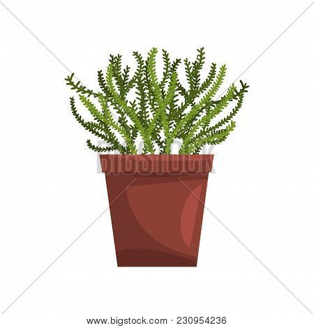 Asparagus Indoor House Plant In Brown Pot, Element For Decoration Home Interior Vector Illustration