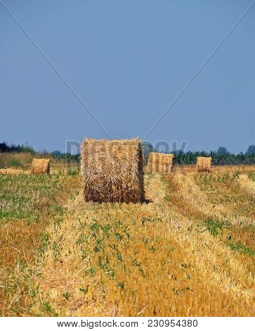 Yellow Golden Bales Of Hay Straw In Stubble Field After Harvesting Season In Agriculture, Perspectiv