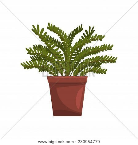 Maidenhair Indoor House Plant In Brown Pot, Element For Decoration Home Interior Vector Illustration