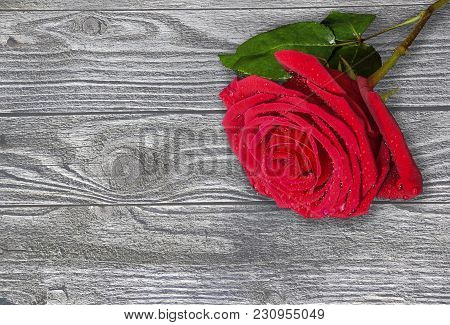 Beautiful Single Red Wet Rose With Water Drops On A Toned Rustic Wooden Background Close Up With Cop