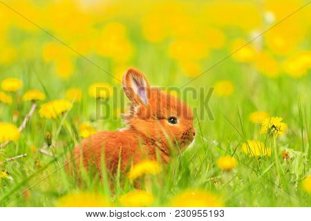 Easter Red Rabbit Sits Among The Yellow Flowers, Baby Animals, Pets