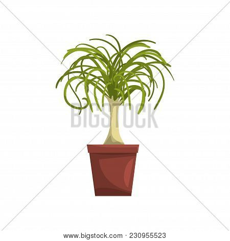 Dracaena Indoor House Plant In Brown Pot, Element For Decoration Home Interior Vector Illustration I